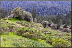 Springtime in  California (Michel Mintaka) Tags: california trees green grass spring muirwoods mttam mttamalpais