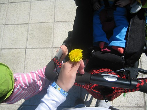 e máis flores de paseo ó sol
