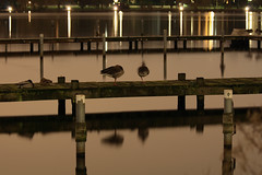 Goose Jetty :-) (arminMarten) Tags: longexposure nightphotography night canon lowlight nacht dslr telephotolens nachtaufnahme  ef70300mmisusm 400d canon400d teleobjectiv  armanh