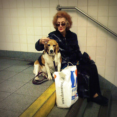 The Woman and the Beagle (antonkawasaki) Tags: nyc portrait newyork beagle stairs subway square streetphotography explore iphone womanwithdog saddog 500x500 explored subwaystories duanereadebag antonkawasaki mobilephotogroup