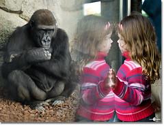 A veces me pregunto... (www.jdavidfuertes.com (Looking 4 work in Madrid)) Tags: show espaa david valencia girl look 50mm jaula monkey mono spain eyes nikon juan d nia ojos jail l