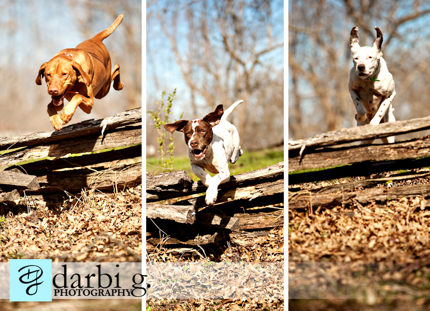 Darbi G photography-dog puppy photographer-_MG_9491-Edit