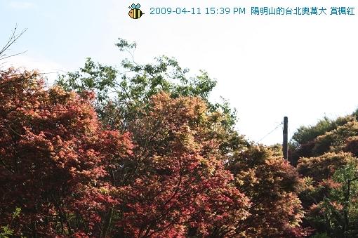 09.04.11台北奧萬大賞楓紅 (25)