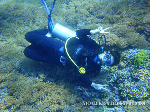 me diving on a bed of corals