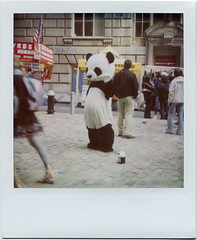 Pathetic Panda (davebias) Tags: polaroid sx70 costume panda sad 600 expired streetfair roidweek2009