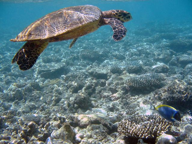 Bathala underwater