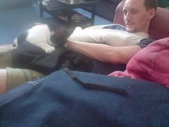 Injured husband + hormonal cat = cuddles! (Mojen) Tags: pet cat kitty husband couch sofa sookie cuddle owen cuddles blacker owenblacker sookiekittens kittensgalore
