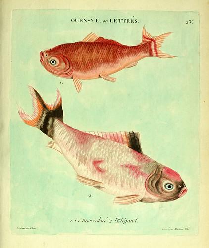 009-El bocado dorado y el Elegante-Histoire naturelle des dorades de la Chine-Martinet 1780