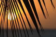 too many sundowners (Swiv) Tags: africa pink sunset sea orange sun bokeh palm frond zanzibar lpsky