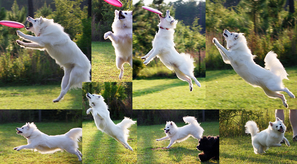Trixie Frisbee collage