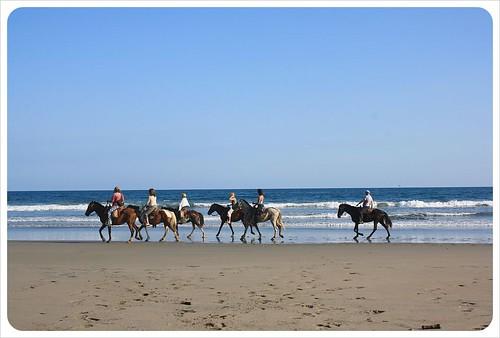 Horses on the beach in Montezuma Costa Rica