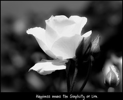 Happiness (PeterJ) Tags: blackandwhite bw macro rose dof bokeh happiness motto olympus wisdom slogan 2011 epl1 frompeterj