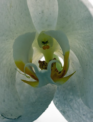 orquidea (joao barroca) Tags: riodejaneiro jardimbotnico 180mm clubefotorio cfrj markiii1ds