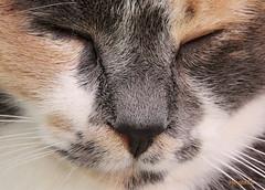 Dharma again (Hinata88) Tags: portrait pet pets cute animals cat canon casa sweet kitty dharma gatto ritratto animale primopiano gattina micio catportrait eos450d impressedbeauty canoneos450d hinata88 silvialai