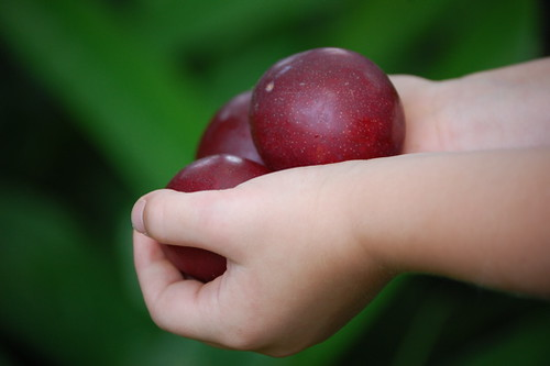 handful of plums