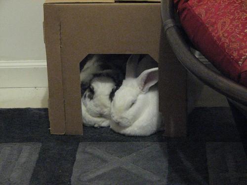 the snuggle box