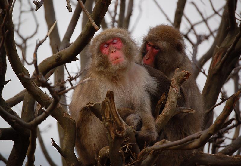 _monkey-26_
