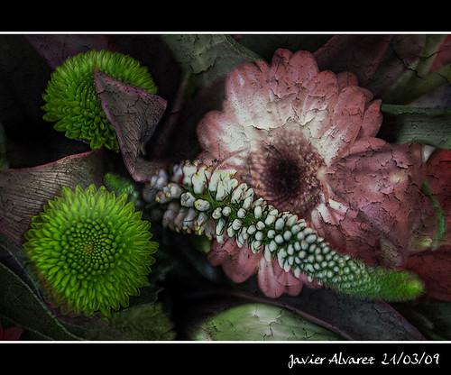 Dirty Flower