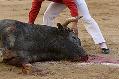 Dead (allencraig) Tags: mexico photojournalism guadalajara animalrights toros bullfight bullfighting animalcruelty plazadeltoros allencraig allenschlossman allencraigphotography