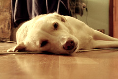 aspa di sera bel tempo si spera ([miss naïve]) Tags: cane aspa aspasia amorina aspra cagnina aspio