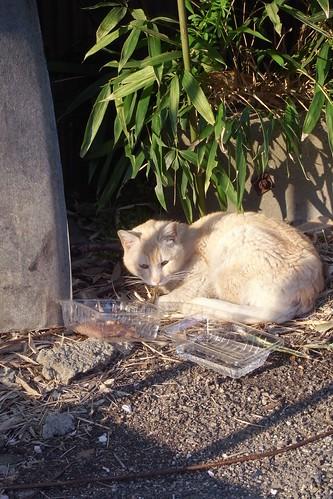 Today's Cat@20090413
