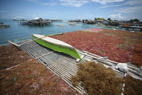 boat and the seaweed