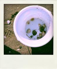 .schelpjes zoeken