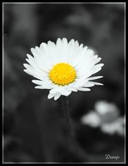 Golden Heart (Doenjo) Tags: espaa flores cutout sevilla andaluca pueblos constantina sierranorte canoneos450d doenjo retofs1 retofs2 retofs3 retofs4