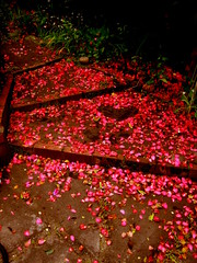 finding happiness is like finding yourself. you never find happiness, you make happiness. you choose happiness. (thesophieee) Tags: road flowers red love garden heart mayflowers