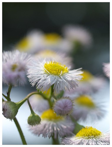 Flowers 20090510 #02