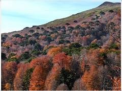 Cuesta en la Meseta Malonehue y Chihuido (Bogaugon) Tags: forest lenga bosque andes araucaria colorphotoaward malonehue chihuido ucalitosnohaba
