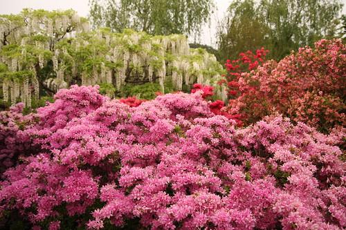 Ashikaga Flower Park 04