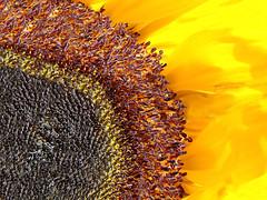 A New Outlook (Jenn (ovaunda)) Tags: yellow sony dsch5 awesomeblossoms jennovaunda ovaunda
