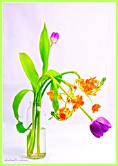 Posing for Me (elisabeth adams) Tags: flowers light stilllife orange flower color green floral fleur composition purple tulips florida vase overexposed tabletop flowerart floralart floridaphotographer elisabethadams pixel8gallery wwwpixel8gallerycom