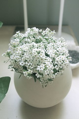 snow crystals (bunbunlife) Tags: white snow flower ikea crystals pot hanging patch zakka