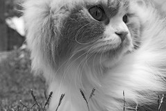 (Mesho_Qatar) Tags: bw never cute grass cat garden nose blackwhite kitten can have tiny they leona looly hereyes mbmqtr yesterday3 lewisyesterday