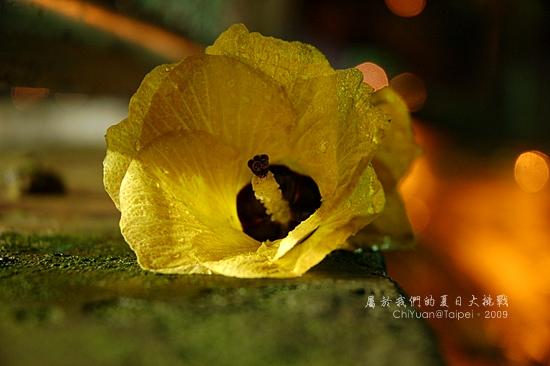 Day15-花朵.JPG