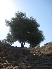 Impression aus Lato (Kreta)