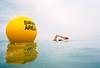 herny in the swim area (lomokev) Tags: sea sport yellow swimming swim nikon brighton kodak action kodakportra400vc henry swimmers portra buoy nikonos kodakportra400 kodakportra nikonosv nikonos5 buoyant swimarea henrylaw nikonosfive file:name=090616nikonosvvc65 roll:name=090616nikonosvvc brightonflickr2009bookpick image:selection=tombing swimareabuoy