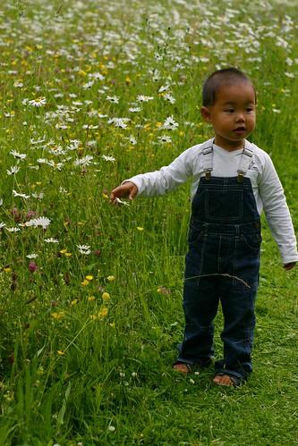 flowermeadow