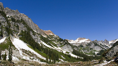 Spider Meadow 004