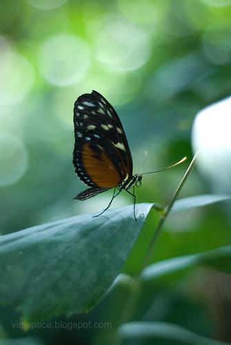 Butterfly Pavillion 06