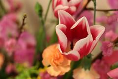 hina-flower