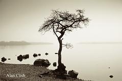 The Tree (Alan Cosh) Tags: tree water rain scotland lochlomond nikond40 millarochybay