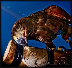 creep eagle (Muchilu) Tags: baby fish pez bird eye alex marina pose de ojo fly nikon barco eagle d cara modelo ibiza ave flare lengua pluma pajaro eivissa 90 bicho creep noble vuelo aguila volar pillada d90 chunga muchilu