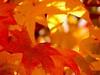 otoño ambar (.el Ryan.) Tags: argentina may mendoza chacrasdecoria