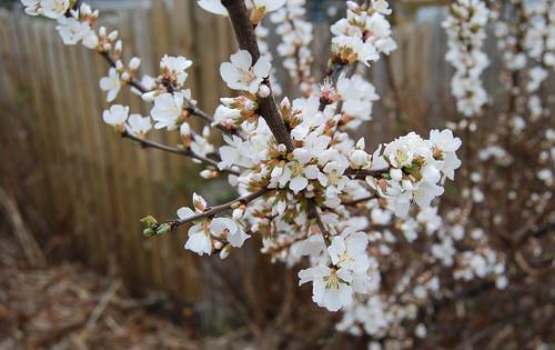 Spring Awakening 03