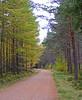 Nature Walk (northerntourer) Tags: trees pine woodland scotland highlands woods larch inverness fujifinepix invernessshire digitalcameraclub