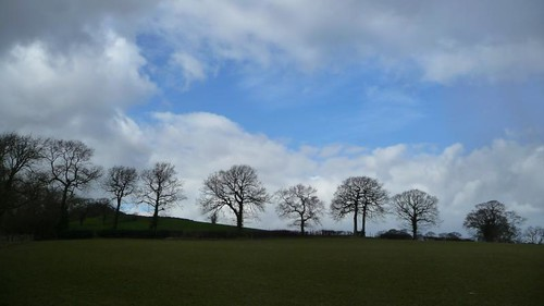 Tree line, Totley Hall Farm