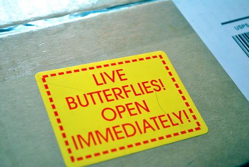 Buterfly Box